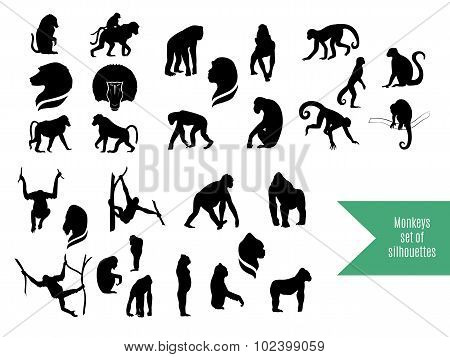 The big set of wild monkeys silhouettes.