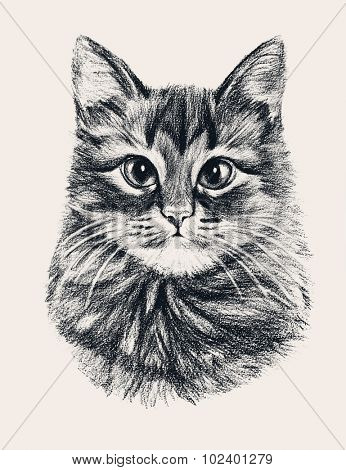 Hand drawn cat. Illustration drawn with colored pencils. Design for T-shirt.