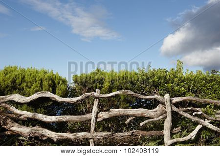Rustic Wooden Fence With Green Vegetation Blue Sky In Azores