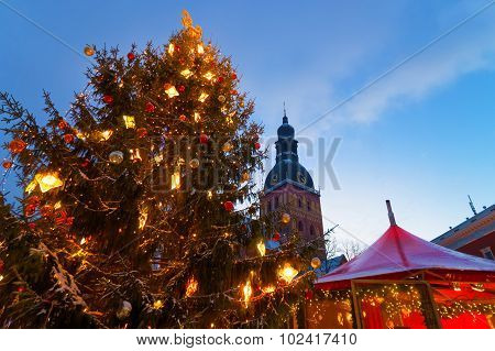 Snowcapped Christmas Tree And The Christmas Market
