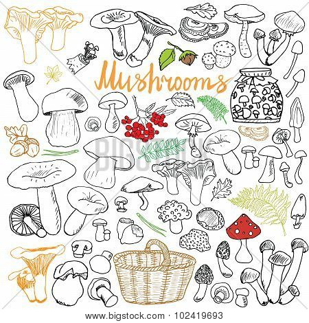 Mushrooms Sketch Doodles Hand Drawn Set. Different Types Of Edible And Non Edible Mushrooms. Vector