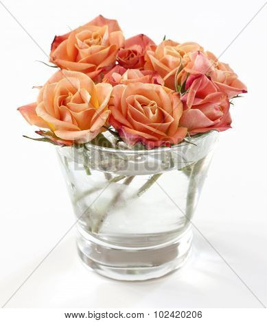 Tender tea roses in a glass on white background