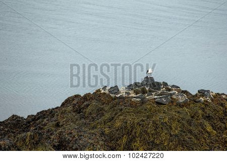 seagull perched on pebbles mount by the sea