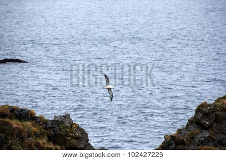 seagull in flight over rocks on the beach.