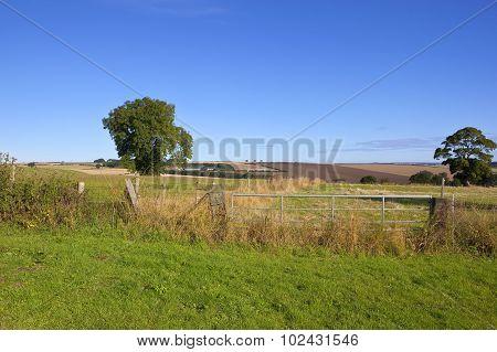 Metal Gate And Landscape