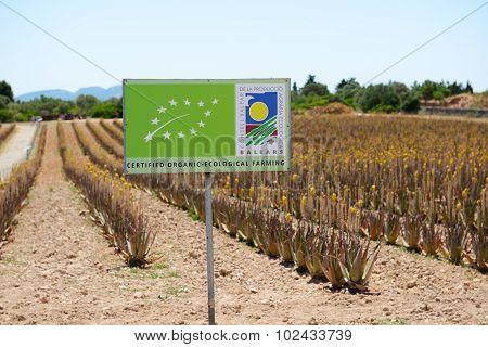 Mallorca, Spain - June 1: The Organic Farm For Aloe Vera Growing On June 1, 2015 In Mallorca, Spain.