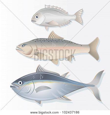 Set of Edible Fishes. Dorado, Salmon and Tuna
