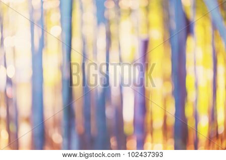 Blurred Bamboo Forest Background At Sunset