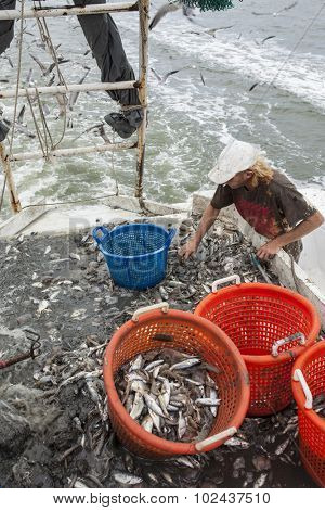 commercial fisherman sorting catch on the deck of a trawler