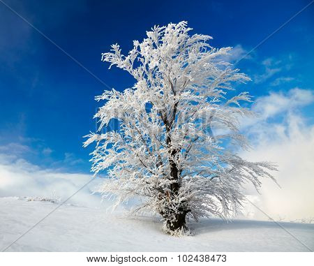 Winter tree over blue sky background