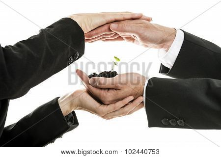 Male And Female Business Hands Holding And Protecting New Green Sprout In A Pinch Of Soil