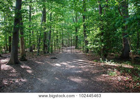 Beech Forest Footpath