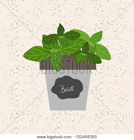 Vector - Fresh Basil Herb In A Flowerpot. Aromatic Leaves Used To Season Meats, Poultry, Stews, Soup