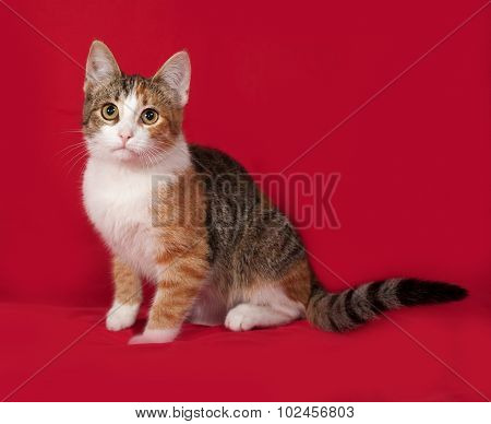 Tricolor Kitten Sitting On Red