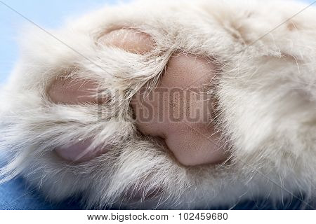 Cat paw close up