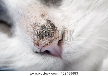 Close up of scar faced domestic cat.