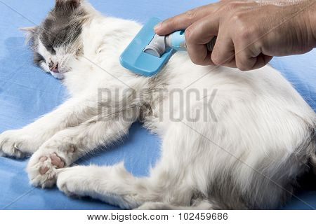 Male hand grooming cat.