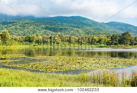 Lotus In Pond And Mountain