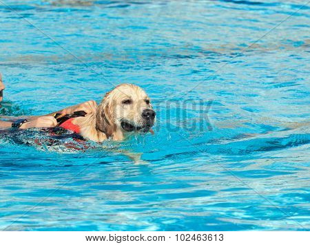 Lifeguard Dog
