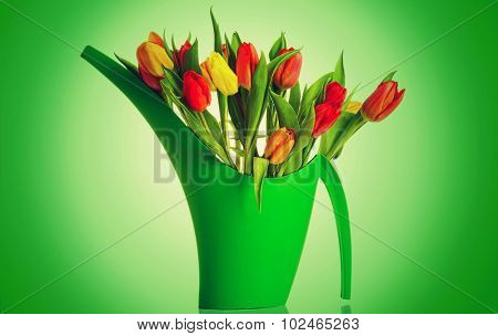 Bouquet of fresh living colorful tulips.