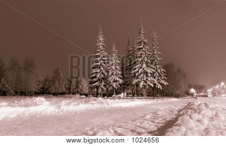 Winter, Night Landscape.
