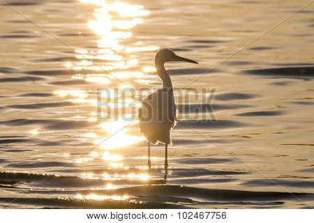 The Silhouette Of The Snowy Egret At The Malibu Lagoon