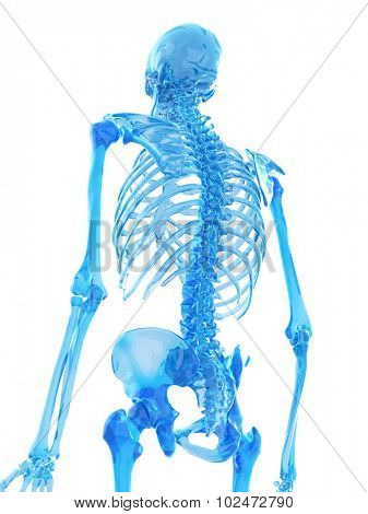 medically accurate illustration of spine
