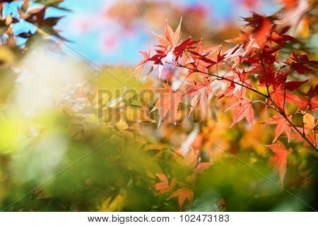 Beautiful colors of autumn. Colorful spectrum of bright autumn colors, Red, orange, yellow, green leaves on a autumn trees. Shallow depth of field.