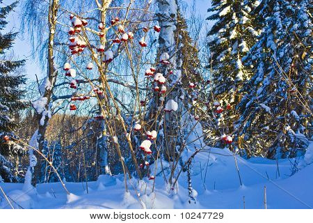 winter in the Siberian taiga