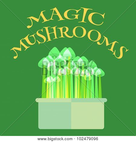 Psilocybin mushrooms grow kit