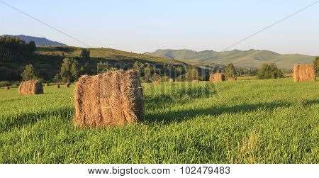 Haystacks on green lawn in the mountains.