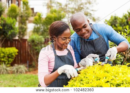 beautiful african couple pruning plant in home garden