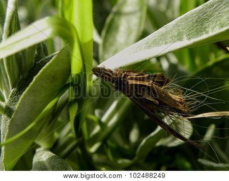 Bagworm 1