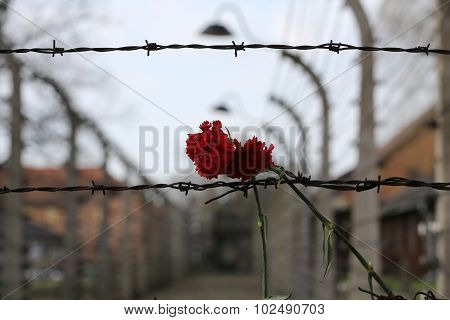 OSWIECIM, POLAND - APRIL 16 2015: Electric fence in former Nazi concentration camp Auschwitz I Poland