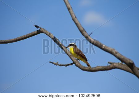 Colorful Bee Eater On Twig With Blue Sky