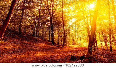 background landscape panorama of autumn with sunset