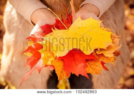 holdinge leaves in hand in autumn