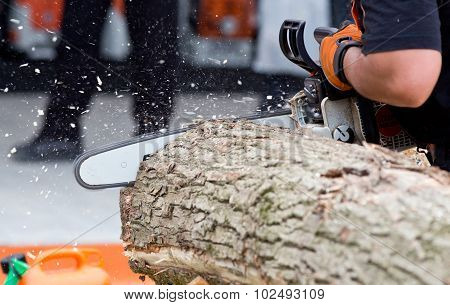 Man Cutting Trunk With Chainsaw