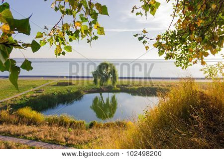 Solitary Willow On The Shore Of A Lake