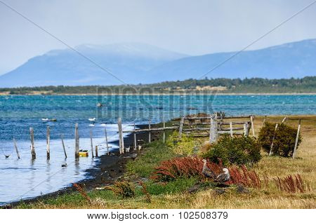Birds On The Island, Puerto Natales, Patagonia, Chile