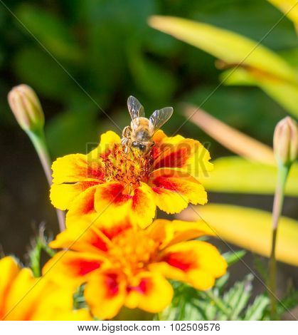 The wasp sitting on a flower.