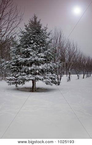 Fantasia de Inverno