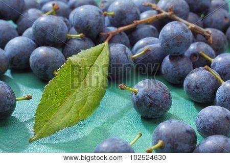 Blackthorn Fruits