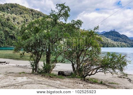 Tree On The Shore, Road Of The Seven Lakes, Argentina