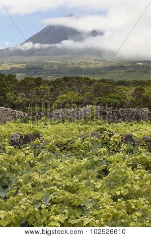 Pico Island Green Landscape With Peak And Vineyard. Azores. Portugal