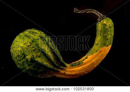 Ornamental Gourd