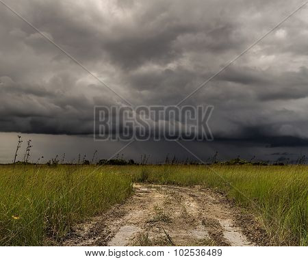Storm Over the Everglades