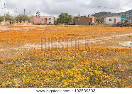 Orange And Yellow Daisies In Garies