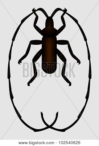 Bug. Vector EPS 10.