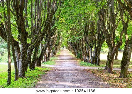 Walking alley between green tree